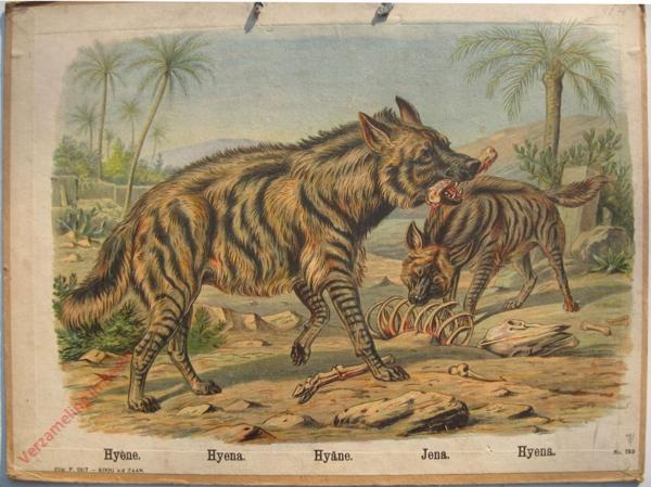 769 - Hyene, Hyena, Hyane, Jena, Hyena